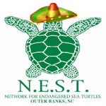 fiesta for sea turtles | saturday, november 2nd