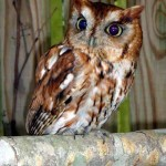 hatteras island wildlife rehabilitation is for the birds…