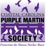 the purple martins of the outer banks