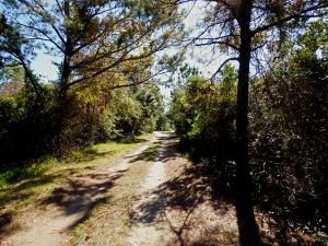 Buxton Woods, NC12 entrance.