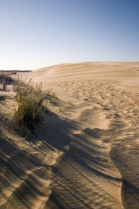 Jockey's Ridge State Park, showing effects of wind on the dunes.