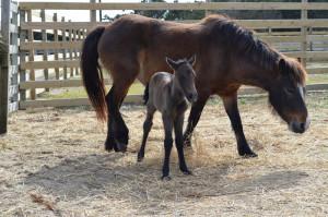 Hazelnut, an new foal