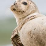 seals make obx winter home