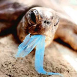 plastic + sea life = :(