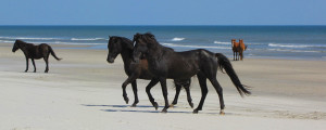 Nature is always right out your door. Photo, Corolla Wild Horse Fund.