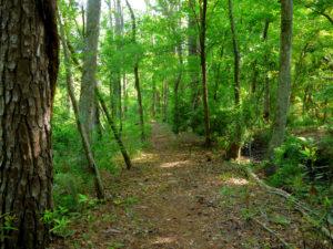 Hiking trail in Kitty Hawk Woods. Photo, Kip Tabb