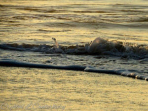 Writer Crystal Canterbury shows her photography skills in this image of Ocracoke surf.