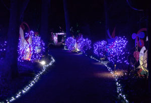 Winter lights illuminating a path at the Elizabethan Gardens. Photo, Kip Tabb