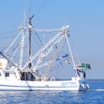 petition threatens NC shrimp catch
