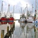 new shrimp regulations = a long battle