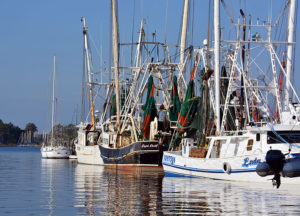 Shrimp fleet at docks in Oriental on the Pamlico Sound.
