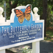 did you know about the butterflies in KDH?