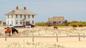 Wash Woods is in the heart of Carova, where the Corolla Wild Horses roam. Image, Corolla Outback Adventures.