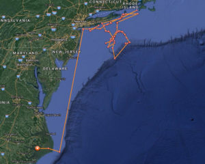 The travels of Bruin the great white shark, as told by his pings.